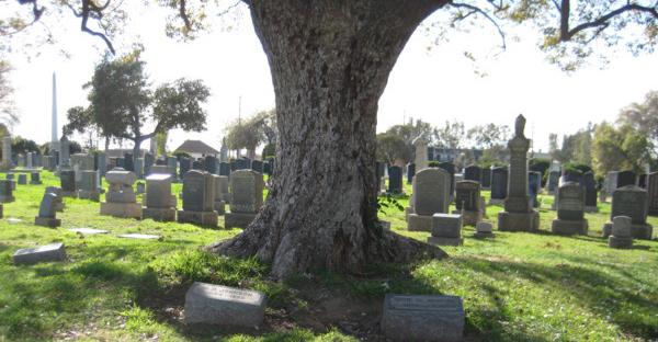自然葬の種類。樹木葬や海洋散骨、7つの基礎知識