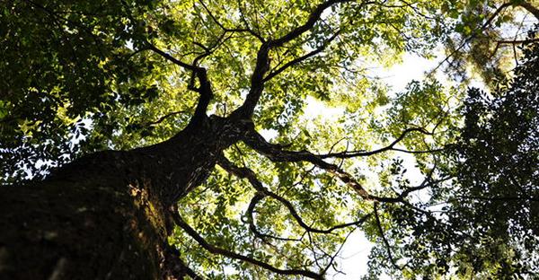 樹木葬とは。自然回帰のニーズに応えた7つの特徴