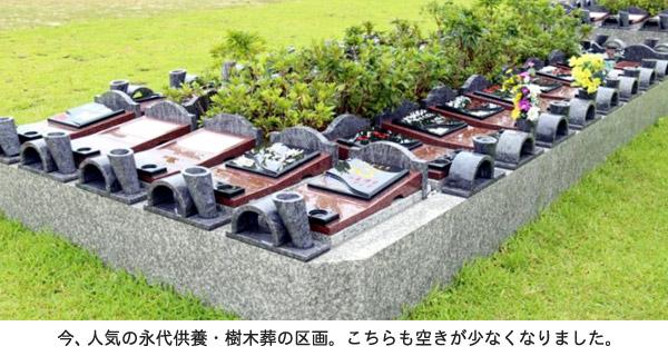 ishigaki0706_jumokusou