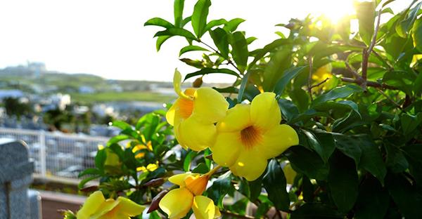 沖縄の霊園でお墓を建てる。最初の一歩から始まる手順とは