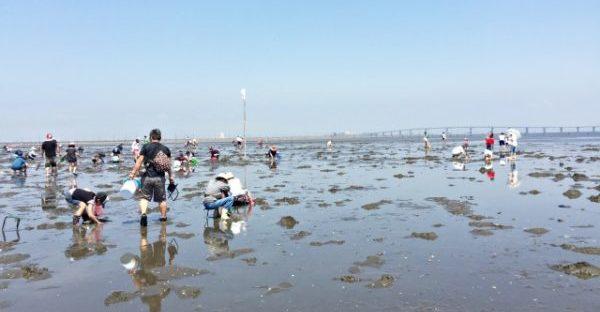 沖縄 潮干狩り 沖縄で潮干狩りが出来る?沖縄の屋我地島で本島と違った貝や海藻を採ろう!